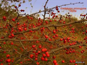 Fűben-fában orvosság?