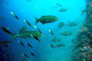 A halolaj minőségéhez fontos a tiszta tenger