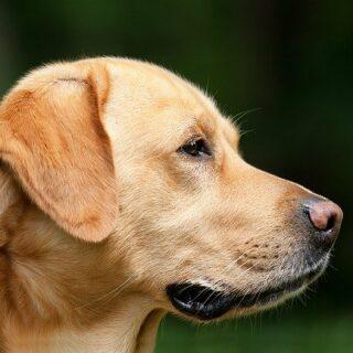 közepes testű kutyák
